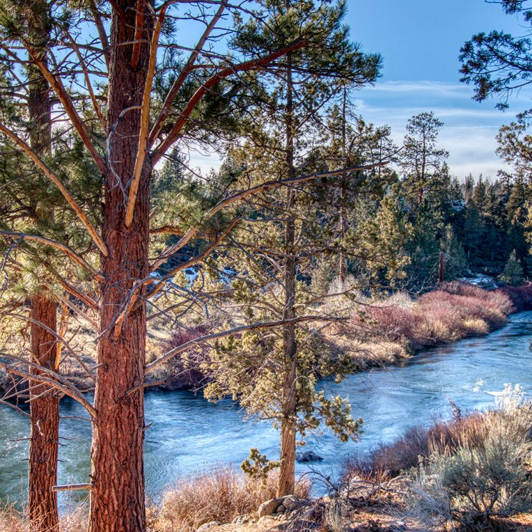 Scenic view through the trees of Deschutes River Tumalo State Park