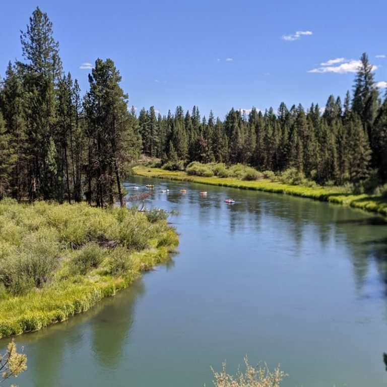 A river bend lined with trees against blue skies