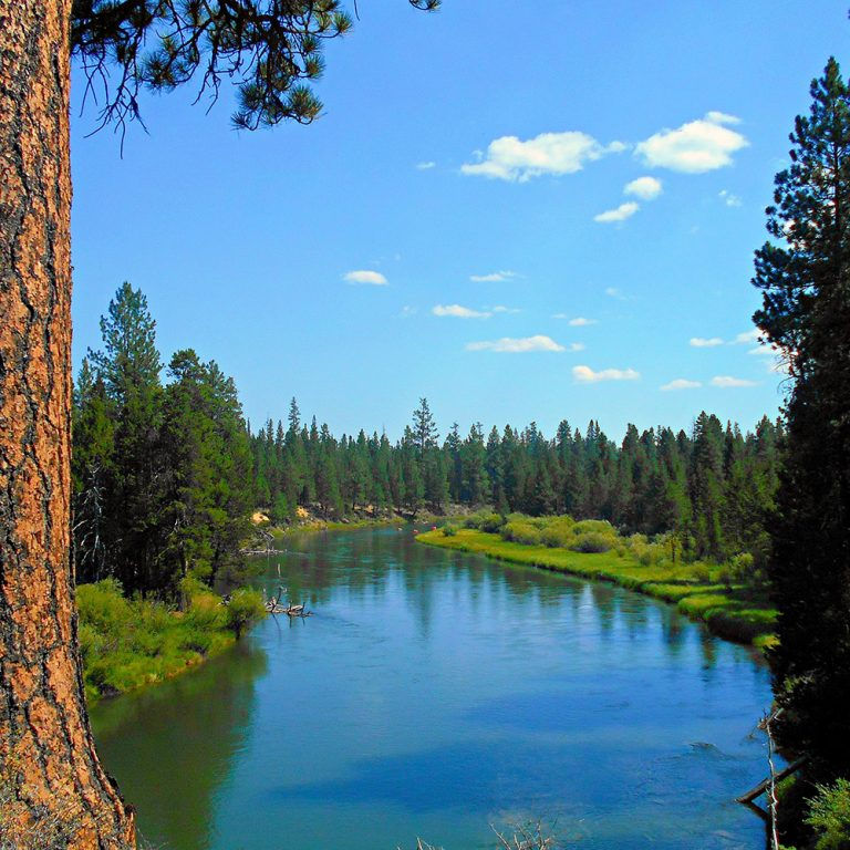 La Pine State Park treeline over water with blue skies