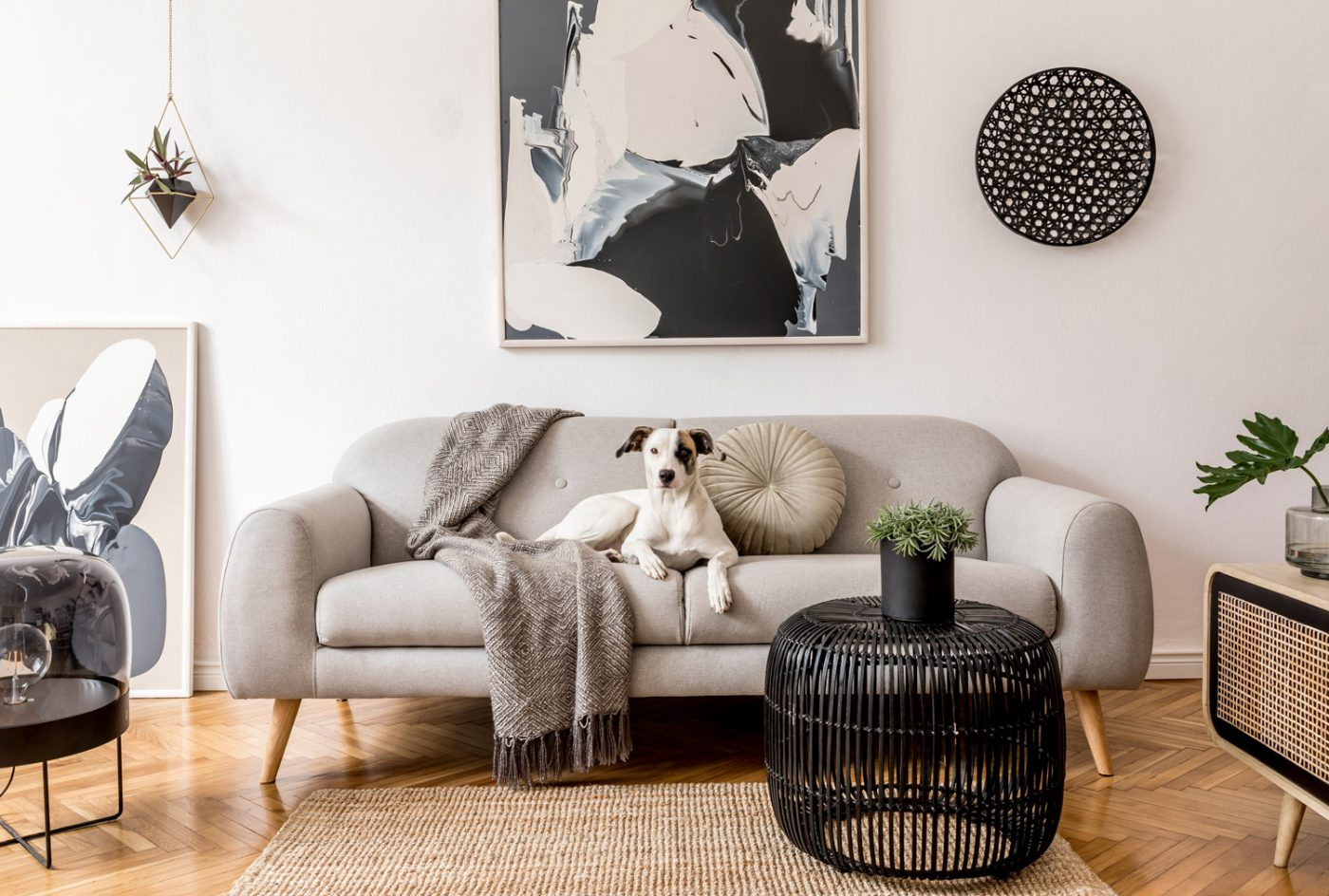 A picture of a dog on a couch; Oregon real estate
